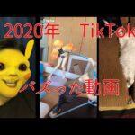 【TikTok】今月のバズり動画【2020年12月】